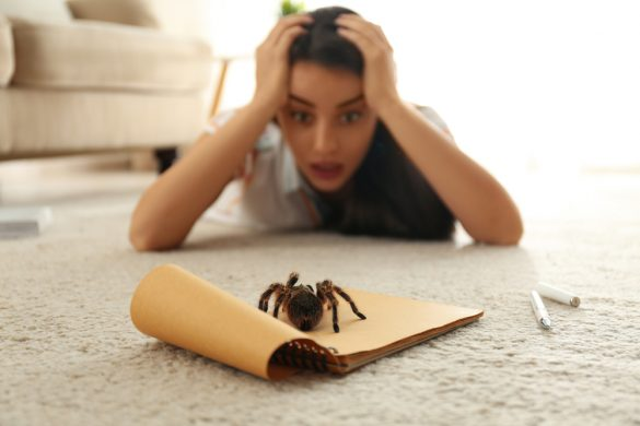 Arachnofobie, Foto: NewAfrica, Deposiphotos