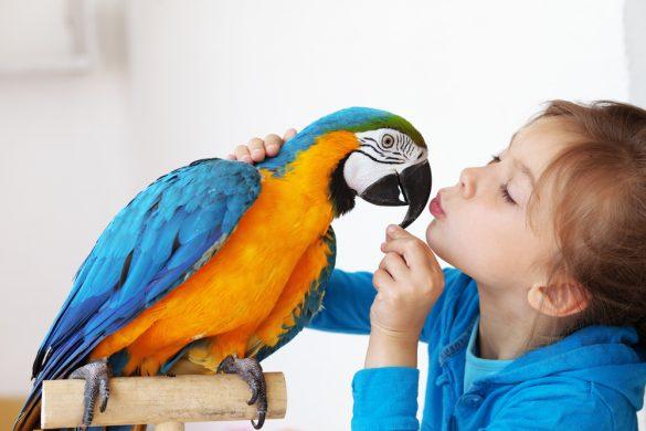 ornitoterapie-a-pozitiva
